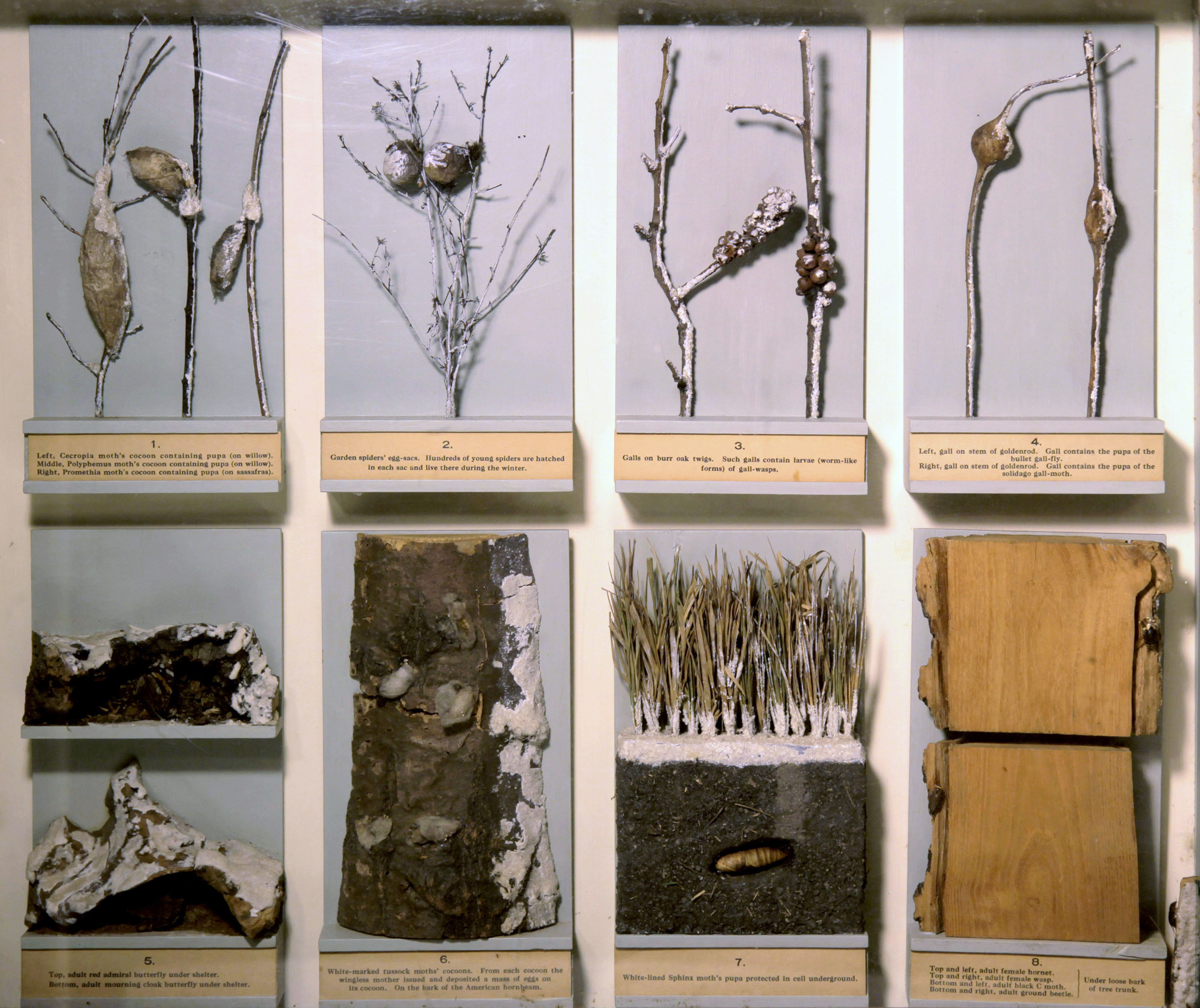 Winter Forms of Insects