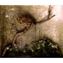Eastern Screech Owl (Habitat Background)