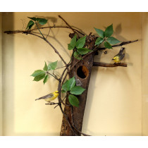 Prothonotary Warbler (With Eggs)