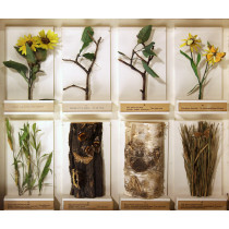 Insects' Protective Coloration