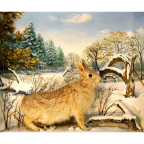 Eastern Cottontail Rabbit (With Evergreens)