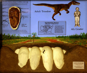 Dinosaur Eggs (Troodon)